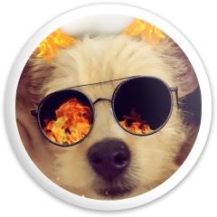 Doggo Latitude 64 Gold Line Missilen Driver Disc