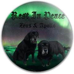 Zeus and apollo Dynamic Discs Fuzion Convict Driver Disc