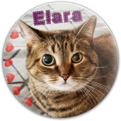 Elara Dynamic Discs Fuzion Judge Putter Disc