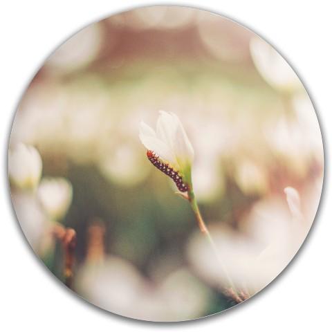Design #65911 (Nature) Dynamic Discs EMAC Truth Midrange Disc