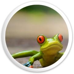 frog driver Dynamic Discs Fuzion Sheriff Driver Disc