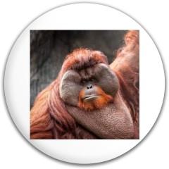 orangutan Dynamic Discs EMAC Truth Midrange Disc