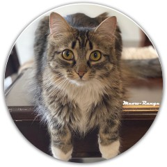 meow-range Dynamic Discs Fuzion Justice Midrange Disc