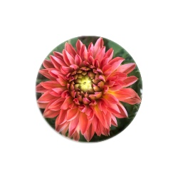 Dahlia Dynamic Discs Judge Mini Disc Golf Marker