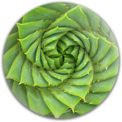 Aloe Spiral Dynamic Discs Fuzion Truth Midrange Disc