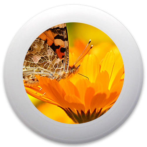 Butterfly on a Flower Innova Pulsar Custom Ultimate Disc