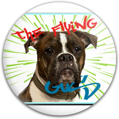 The Flying Gus Dynamic Discs Fuzion Judge Putter Disc