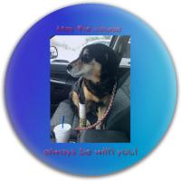 Dog Dog Dynamic Discs Fuzion Justice Midrange Disc