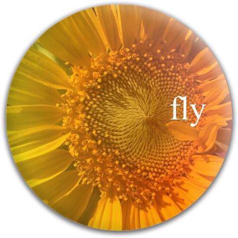 Fly Discs Sunfly Dynamic Discs Fuzion Suspect Midrange Disc