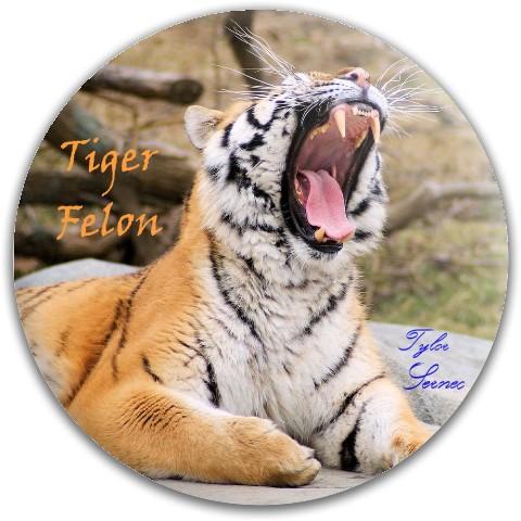 Tiger Felon Monster!!! Dynamic Discs Fuzion Felon Driver Disc