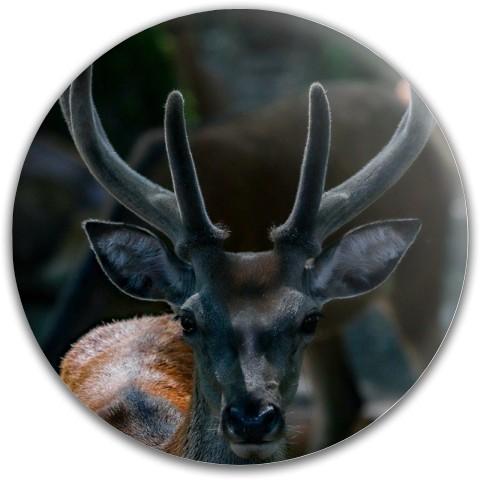 Design #63021 (Animals) Dynamic Discs Fuzion Slammer Driver Disc