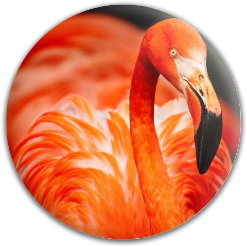 Design #63665 (Animals) Dynamic Discs Fuzion Slammer Driver Disc