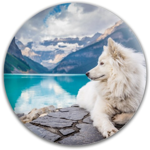 Design #64564 (Animals) Dynamic Discs Fuzion Judge Putter Disc