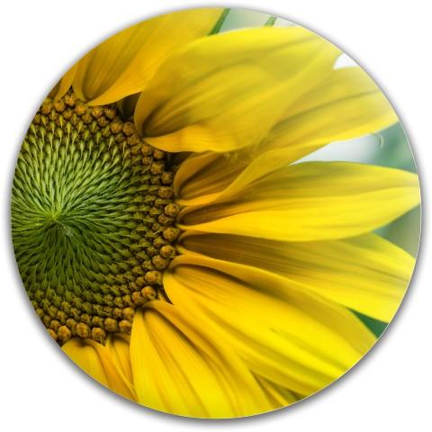 Nature Disc Latitude 64 Gold Line Compass Midrange Disc