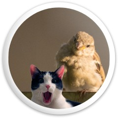 Scream Cat Big Bird Prodigy Disc