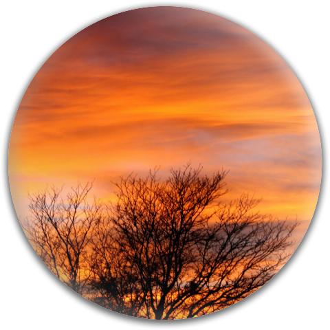 Fall Sunset Dynamic Discs Fuzion Verdict Midrange Disc