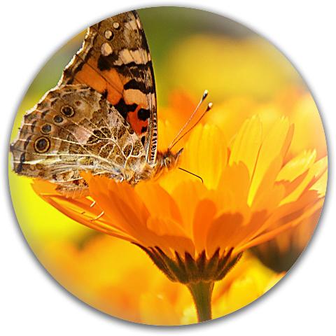 Butterfly on a Flower Dynamic Discs Fuzion Verdict Midrange Disc